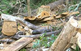 Phát hiện vụ phá rừng tự nhiên đầu nguồn quy mô lớn tại Bình Định