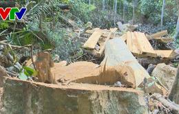 Vụ phá rừng tự nhiên phòng hộ tại Bình Định: Có dấu hiệu của tội phạm hình sự