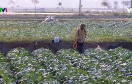 Điều trị khi bị phơi nhiễm thuốc bảo vệ thực vật
