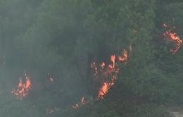 Tổng cục Lâm nghiệp: Cần nêu cao trách nhiệm trong công tác phòng chống cháy rừng