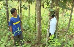 Quảng Ngãi thu hồi trên 14.000 ha đất lâm nghiệp giao cho người dân