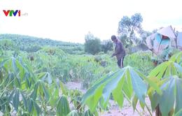 Quảng Ngãi thu hồi hơn 14.000ha đất lâm nghiệp giao cho dân