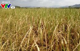 Thiếu nước gay gắt ở các huyện miền núi Phú Yên