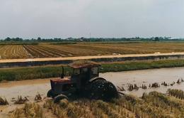 Doanh nghiệp đẩy mạnh đầu tư vào nông nghiệp công nghệ cao