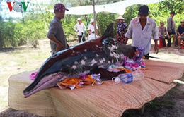 Cá voi nặng 200 kg trôi dạt vào bờ biển Quảng Nam