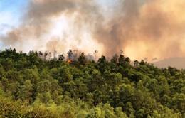 Cháy gần 10ha rừng thông ở Thanh Hóa