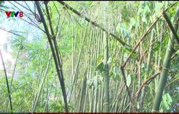 Quảng Nam phát hiện một lượng gỗ lớn quy cách