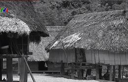 Tấm lòng của đồng bào Vân Kiều, Pa Kô với cách mạng