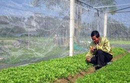 Vắng bóng doanh nghiệp đầu tư nông nghiệp
