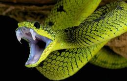 Ẩn họa rắn cắn ở vùng sâu, vùng xa