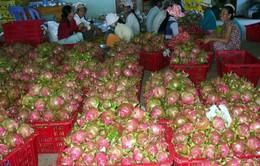 Thanh long xuất khẩu phụ thuộc vào một thị trường