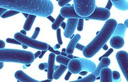 Trò chuyện cùng Dr.ANH: Lợi khuẩn là gì?