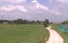 TP.HCM: Công khai kế hoạch chuyển đổi 26.000 ha đất nông nghiệp