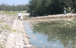 Hà Tĩnh: Phạt 435 triệu đồng doanh nghiệp nuôi tôm xả thải ra môi trường