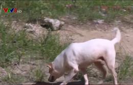 Hiểm họa từ chó thả rông