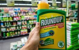 Cục Bảo vệ thực vật sẽ loại bỏ glyphosate ngay khi có đủ bằng chứng có nguy cơ gây ung thư