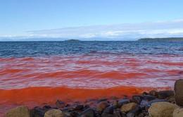 Thủy triều đỏ đe dọa vùng biển Florida