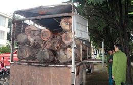 Lâm Đồng: Bắt quả tang xe tải chở gỗ lậu