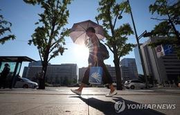 Nắng nóng gây thiệt hại lớn tại Hàn Quốc