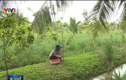 TP.HCM công khai quá trình chuyển đổi đất nông nghiệp