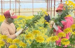 Chấp nhận rủi ro, nông dân bán hoa theo phương thức ký gởi