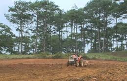 Nhập nhằng trong san ủi đất nông nghiệp tại Lâm Đồng