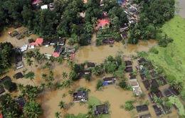 Ấn Độ: Hơn 1 triệu người phải sơ tán do mưa lũ