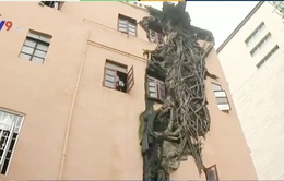 Cây cổ thụ mọc xuyên qua tòa nhà 4 tầng ở Trung Quốc