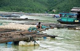 Nguy cơ tái diễn thiệt hại do thiên tai ở vùng nuôi thủy sản