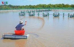 Cà Mau tiếp tục phát triển mô hình tôm - rừng sinh thái