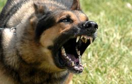 Tử vong vì bệnh dại sau hơn 2 năm bị chó nhà hàng xóm cắn