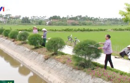 Phụ nữ Hải Hậu, Nam Định làm sạch đường quê