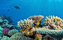 """VIDEO: Lặn ngắm san hô biển tại """"đảo núi lửa"""" Lý Sơn"""