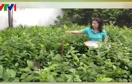 Trải nghiệm công việc hái hoa cúng Rằm tháng 7 tại làng hoa Ngọc Hà