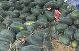 """Tiêu điểm: """"Giải cứu"""" nông nghiệp - Hệ quả của khuyến nông kém"""