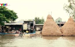 Mực nước sông Cửu Long đang lên, nguy cơ xảy ra ngập lụt ở các vùng trũng thấp