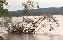 Thanh Hóa: Dân hoang mang vì bờ sông sạt lở nghiêm trọng
