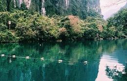 Hoàn thiện đề án thành lập Khu bảo tồn thiên nhiên Động Châu - Khe Nước Trong