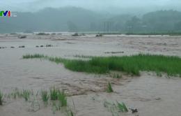 Mưa lũ gây thiệt hại lớn tại Điện Biên