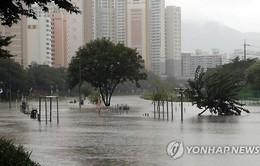 Mưa lớn gây ngập lụt tại Hàn Quốc, 1 người thiệt mạng