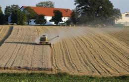 Nguy cơ mất mùa do thời tiết cực đoan tại châu Âu