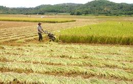 Phú Yên: Nguồn lực đầu tư vào lĩnh vực nông nghiệp, nông thôn tăng 2,4 lần