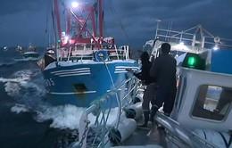Tàu cá của Anh và Pháp thủy chiến vì sò điệp