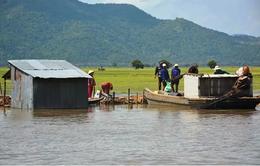 Nước lũ lên cao gây thiệt hại hơn 700ha lúa tại An Giang