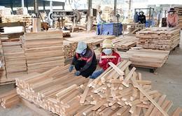 Chuyển đổi nguồn cung nguyên liệu, đảm bảo xuất khẩu gỗ bền vững