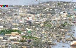 Bức bối rác thải nông nghiệp ở Đà Lạt