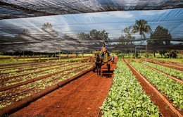 Cuba nới lỏng quy định cho thuê đất