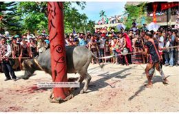 Người dân bức xúc về thu phí lễ hội đâm trâu ở Thừa Thiên Huế