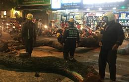 Cây cổ thụ ở TP.HCM đổ sập, nhiều người bị đè dưới tán cây