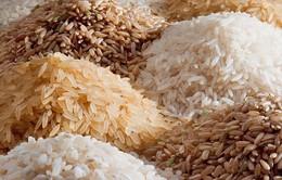 Cô giáo gây tranh cãi khi giao bài tập đếm 100 triệu hạt gạo cho học sinh